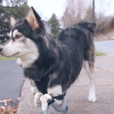 Man's Best Friend Gets Man's Best Technology: 3D-Printed Prosthetic Limbs for Disabled Dogs